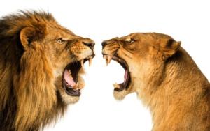 конфликтность партнеров